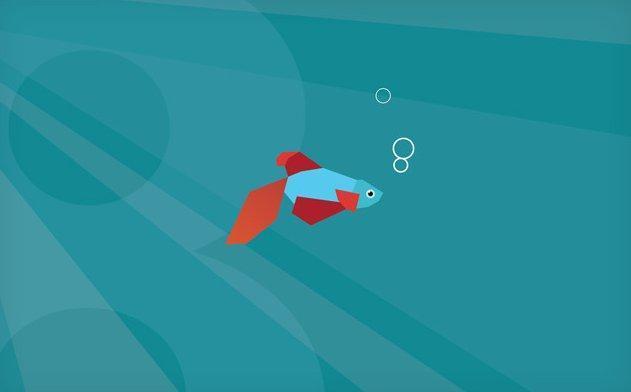 Одна из стандартных заставок Windows 8 - популярная бойцовская рыбка